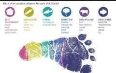 Ecological footprint essay